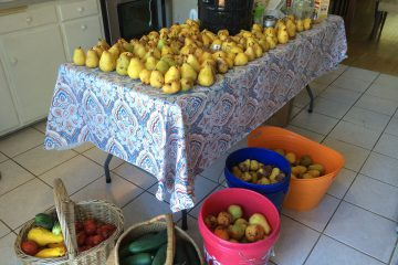 Apples and Pears…Oh My! Garden Observations and Recipes